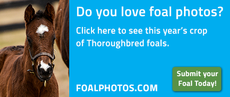 FoalPhotos.com